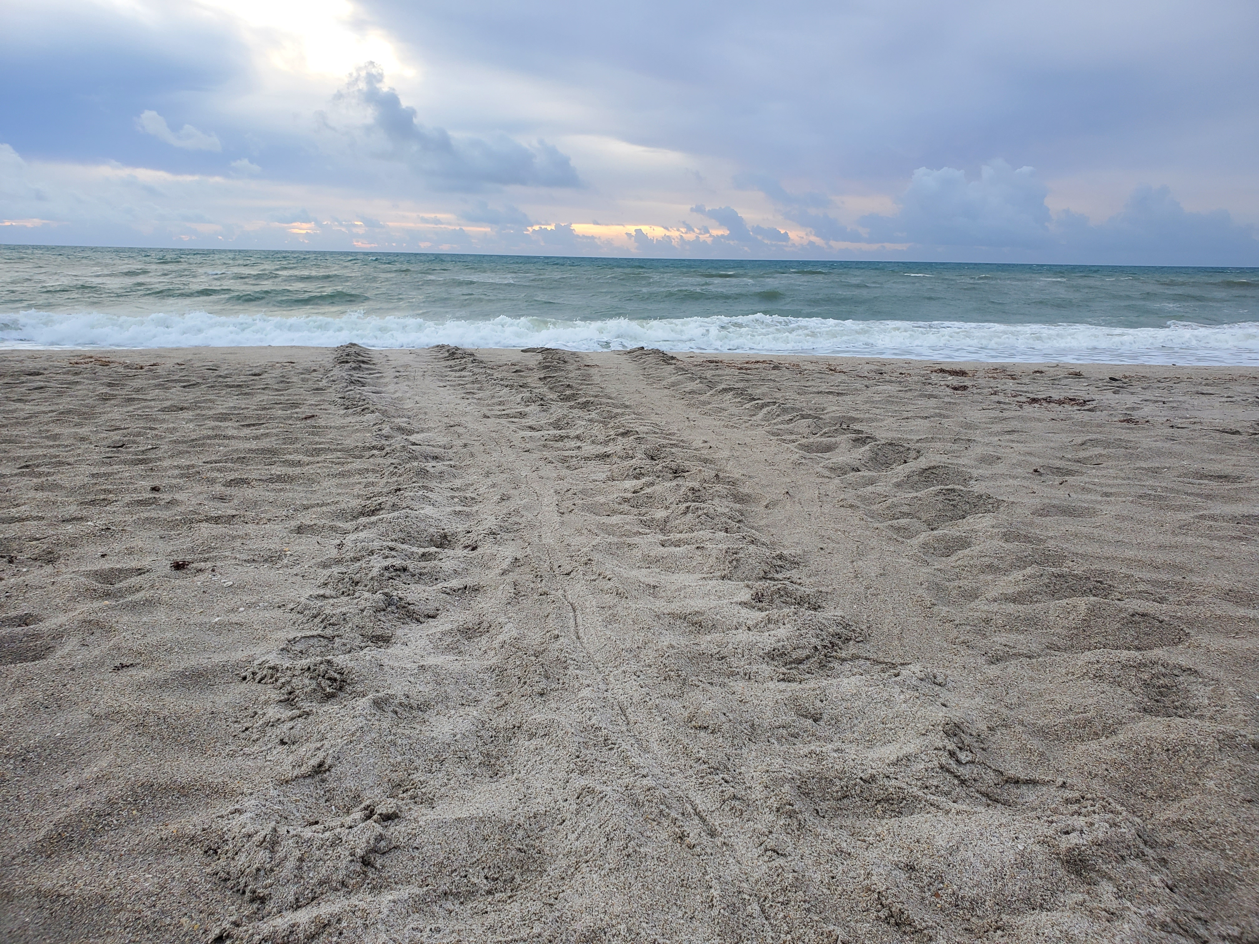 sea turtle tracks