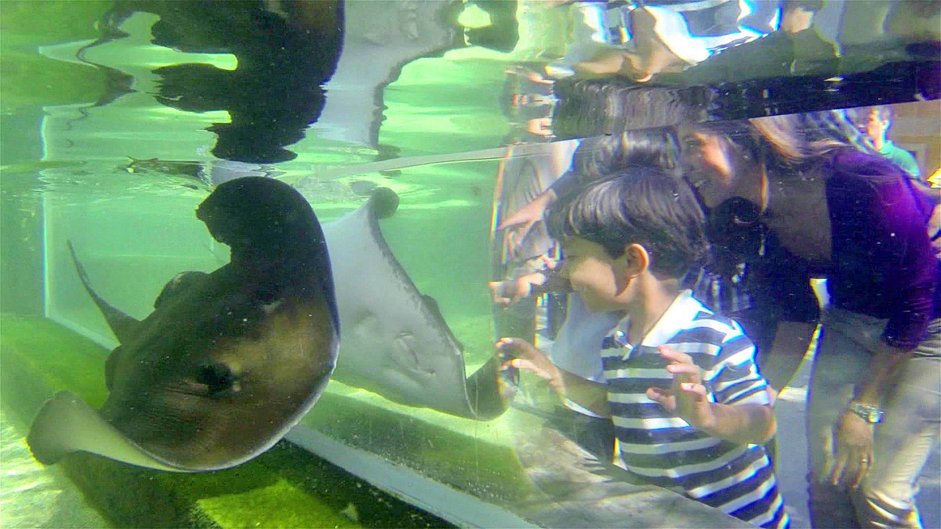 Ray Lagoon at Brevard Zoo