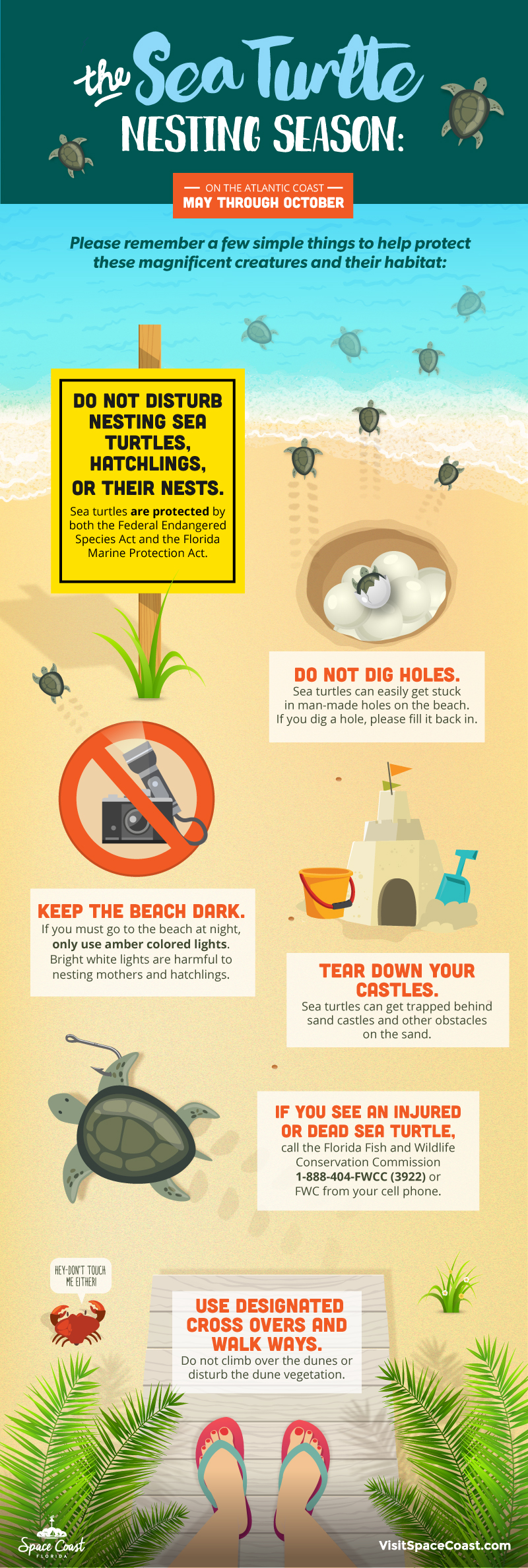 sea turtle safety infographic