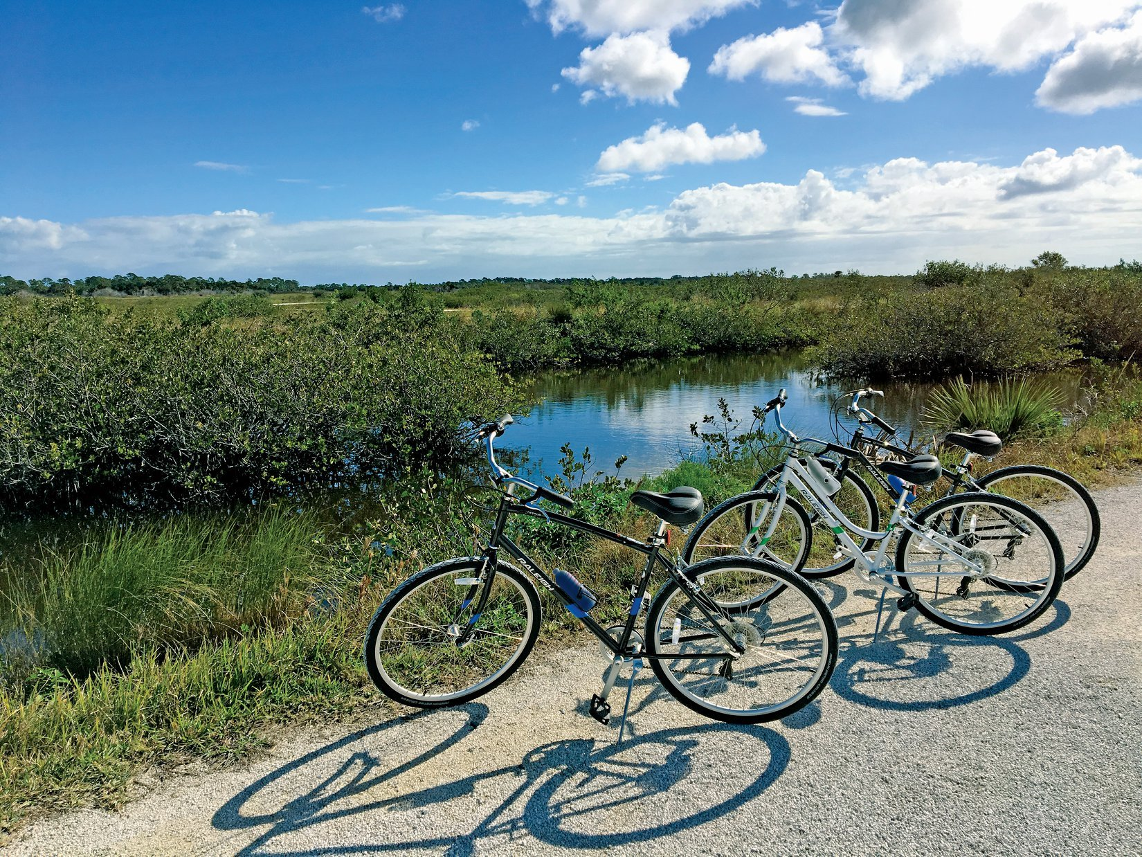 bikes along a tall grass trail with a little pond