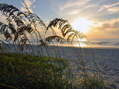 Sea Oats on the Space Coast