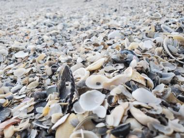 Space Coast Seashells