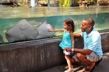 A kid marvels at the stingray exhibit at the Brevard Zoo in Viera, FL