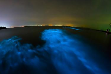 Bioluminescence on Florida's Space Coast