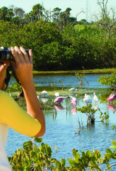 Birdwatching at the Space Coast Birding and Wildlife Festival in Titusville, FL