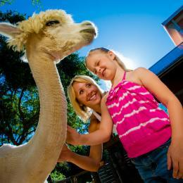 A family gets to pet an animal at the Brevard Zoo