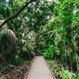 A trail in the Enchanted Forest Sanctuary in Titusville, FL