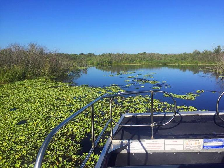 An airboat nature tour through the St. Johns River at Camp Holly