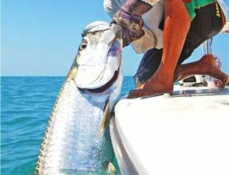Catching fish offshore with Fin & Fly Fishing Charters