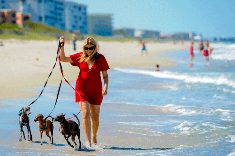 Dog-friendly on the Space Coast